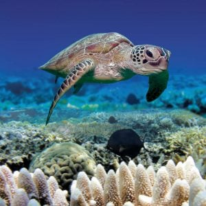 obr-tour-outer-reef-marinelife-07